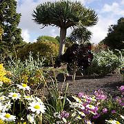 Floral displays at Auckland Botanic Gardens. Auckland, New Zealand, 11th November 2010. Photo Tim Clayton