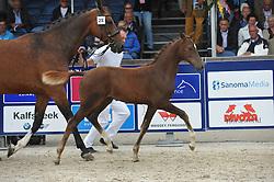 028 - Julius Caesar<br /> Hengstveulens springen<br /> KWPN Paardendagen - Ermelo 2014<br /> © Hippo Foto - Leanjo de Koster