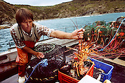 Australia's population is concentrated on the coasts, which means that seafood is a major part of most people's diets; especially shrimp and spiny lobster (shown here being harvested off Cape Otway, near Melbourne). The Molloys, of Brisbane, Australia, are an exception. Although John and Sean love seafood, Em is skeptical and Natalie can't abide it. Hungry Planet: What the World Eats (p. 32).