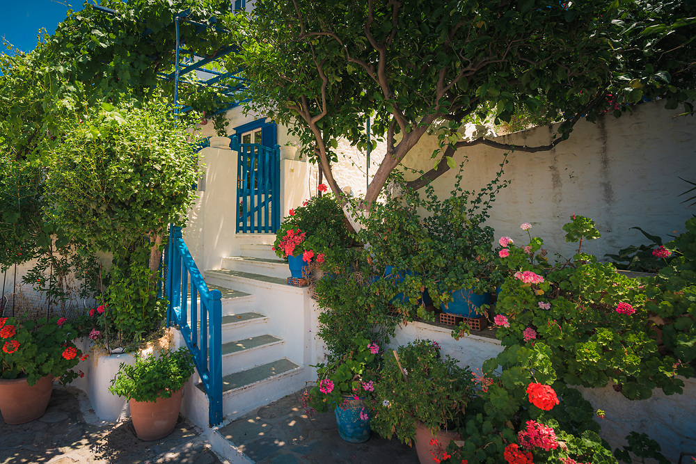 Flowers on the streets of Hydra Island, Greece