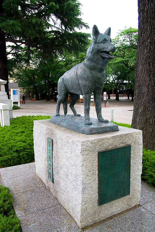 "Yasukuni Shrine: Statue of German Shepherd honouring animals killed in war service.....Yasukuni Shrine, originally named Tokyo Shokonsha was constructed in June 1869 by order of the Meiji Emperor to commemorate soldiers who had died in the Boshin War and had fought on the side of the Restoration. At that time it was one of several dozen such shrines built throughout Japan. In 1879, the shrine was renamed Yasukuni Jinja and became one of the principal shrines associated with State Shinto as well as the primary national shrine for commemorating Japan's war dead. The name Yasukuni, a quotation from Zuo Zhuan (a classical-era Chinese text), literally means ""Pacifying the Nation"" and was chosen by the Meiji Emperor.[8] The shrine has performed Shinto rites to house the kami (spirits) of all Japanese and former colonial subjects (Korean and Taiwanese) and civilians who died while participating in the nation's conflicts until the end of the US occupation of Japan in 1951..."