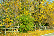 Autumn leaves along a rural road in Lucas County near Toledo, Ohio, USA. October 2014