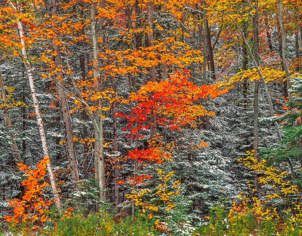 First snow dusts White Mountain National Forest in fall, along the Appalachian Trail, Warren, NH