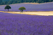 NATURE:  Lavender Provence