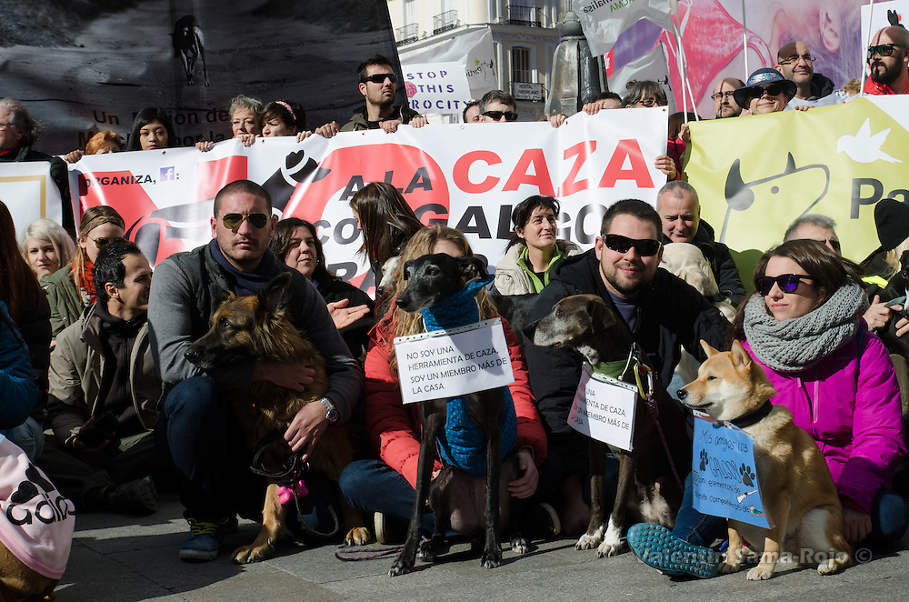 Madrid, Spain. 7th Feb, 2016. Demonstrators with their dogs carrying placards against hunting during the demonstration held in Madrid.