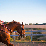20120918 Stauffer Barrel Horse