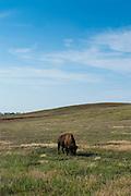 Buffalo, South Dakota, USA