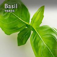 Basil Pictures | Basil Photos Images & Fotos