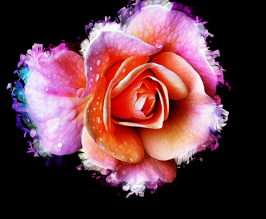 A Splashy Vision Of A Blooming Rose On Black