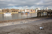 A little terrier dog barking while playing on the riverfront beach. The South Bank is a significant arts and entertainment district, and home to an endless list of activities for Londoners, visitors and tourists alike.