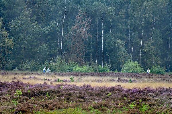 Nederland, Valkenswaard, 7-9-2013Wandelaars op de Malpieheide.Foto: Flip Franssen/Hollandse Hoogte