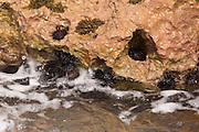 Sea Urchins at La Playuela beach at Cabo Rojo wildlife preserve Puerto Rico