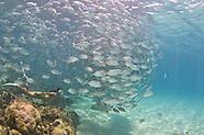 Philippines, Calamian Islands