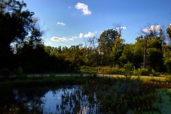 30 August 2014:   Natural setting of a small pond or lake surrounded by timber with a background of a blue sky with puffy white clouds.  This image was shot with a perspective corrective lens to control the focus and blur to create a special effect<br />