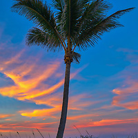 South Florida sunset photography from photographer Juergen Roth showing beautiful evening light framing a Palm tree. <br />