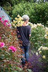 Rachel Siegfried picking Rosa 'Irish Hope' syn. 'Harexclaim'