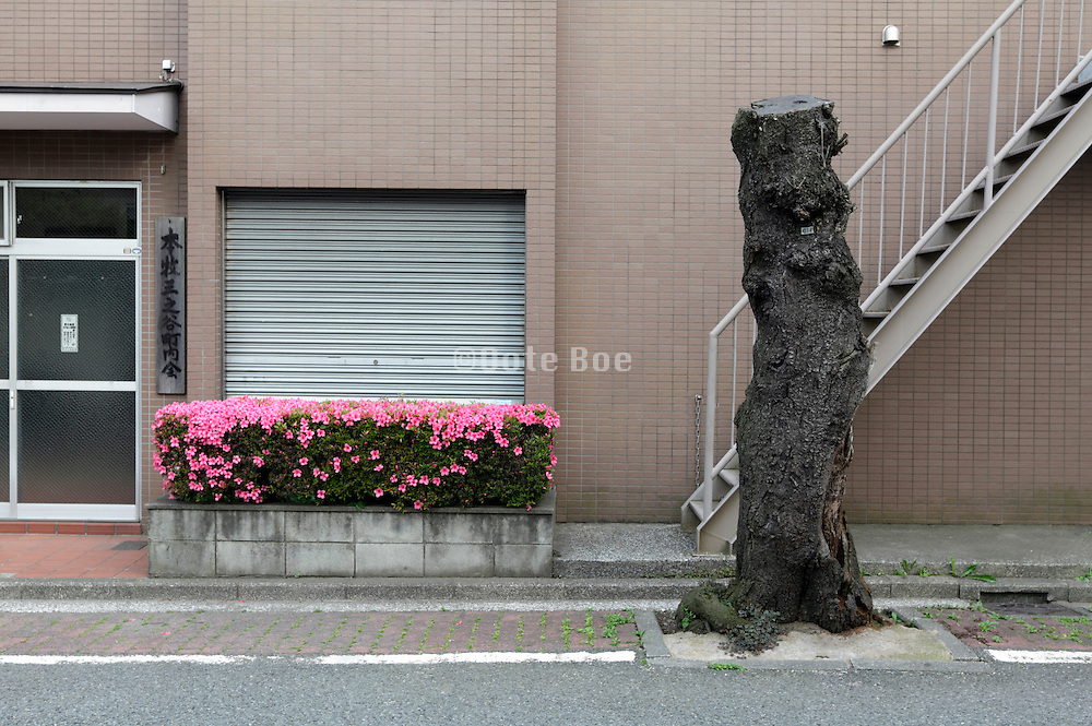 cut tree with lush flowers along road