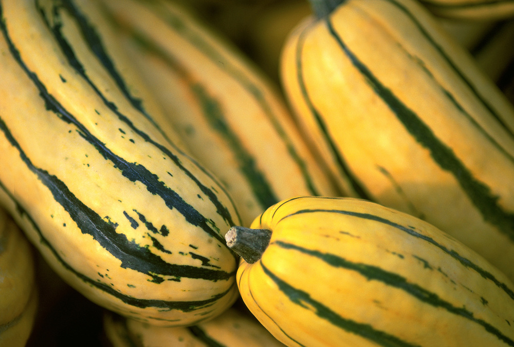 Close up selective focus photograph of some Delicata Squash in the sunlight