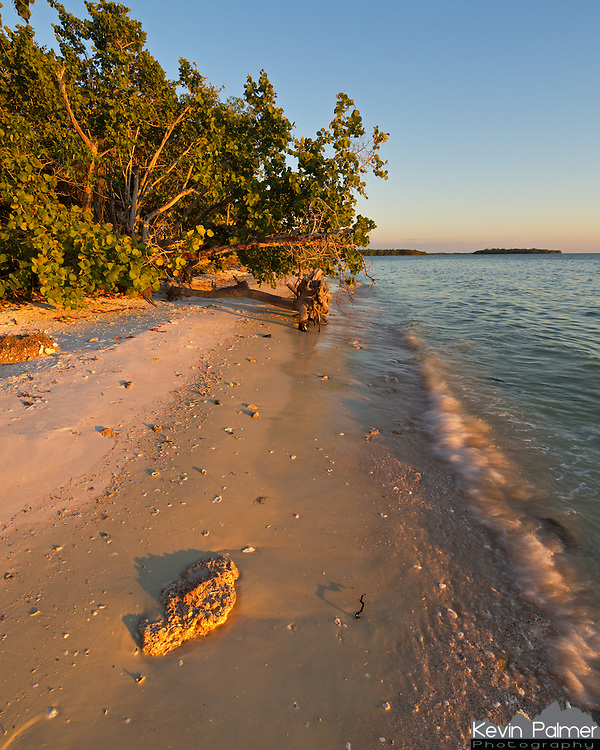 A piece of coral on the Picnic Key beach lights up in the evening sunlight. This was one of many small islands in the Ten Thousand Islands Unit of Everglades National Park.<br />