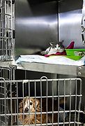 Oristano, Clinica Veterinaria due Mari, ospiti della clinica