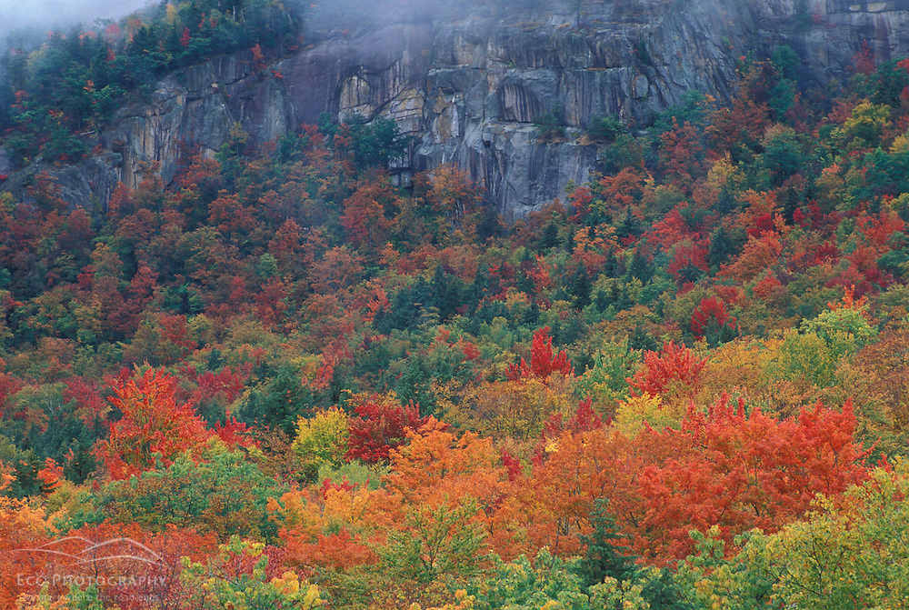 Northern Hardwoods Forest.  White Mountain N.F.  Kancamagus Highway.  Fall foliage.  Albany, NH