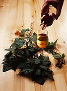 Black Currant liqueur being added to wine with boughs of black currants, Winterlake Lodge, Finger Lake, Alaska.
