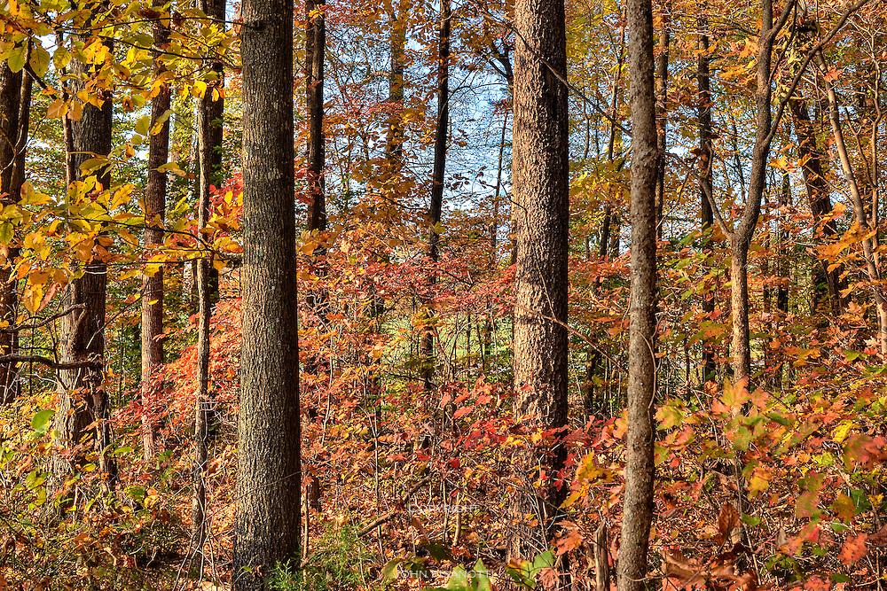 Autumn forest near Appomattox Courthouse, Virginia