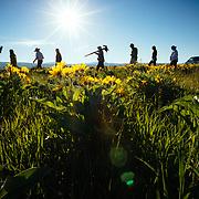 A Teton Teton Science Schools wildlife tour stops to explore the balsamroot flowers along the Antelope Flats Road in Grand Teton National Park, Wyoming.(Greg Peck, Matthew Bart, Sean Baker, Maura Bushior, Katie-Cloe Stock, Tracy Logan, Paul Maddex, Lead Guide Dawson)