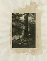 Tea stained asian print of a wild tree trunk and it's roots,