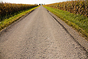 A gravel road flanked by corn fields runs past the Illinois grain farmer Gordon Stine's farm in St. Elmo, Illinois.   (Gordon Stine is featured in the book What I Eat; Around the World in 80 Diets.)