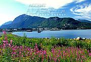 Alaska. Haines. Chilkat SP. View of historic town with fireweed (Epilobium angustifolium) bordering Portage Cove.