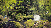 A panoramic of a photographer engrossed in the lush forest and stream at Lower McLean Falls, Catlins, New Zealand