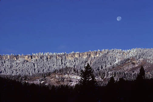 Yellowstone National Park, Ice covered ridge of pines near Mammoth Hot Springs