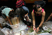Sima, 27, (right) Janet, 43, centre, and another member of the Freegan community searching for edible food from one of the numerous damp sites in Manhattan, New York, NY., on Wednesday, July 19, 2006.  Freegans are a community of people who aims at recovering wasted food, books, clothing, office supplies and other items from the refuse of retail stores, frequently discarded in brand new condition. They recover goods not for profit, but to serve their own immediate needs and to share freely with others. According to a study by a USDA-commissioned study by Dr. Timothy Jones at the University of Arizona, half of all food in the United States is wasted at a cost of $100 billion dollars every year. Yet 4.4 million people in the United States alone are classified by the USDA as hungry. Global estimates place the annual rate of starvation deaths at well over 8 million. The massive waste generated in the process fills landfills and consumes land as new landfills are built. This waste stream also pollutes the environment, damages public health as landfills chemicals leak into the ground, and incinerators spew heavy metals back into the atmosphere. Freegans practice strategies for everyday living based on sharing resources, minimizing the detrimental impact of our consumption, and reducing and recovering waste and independence from the profit-driven economy. They are dismayed by the social and ecological costs of an economic model where only profit is valued, at the expense of the environment. In a society that worships competition and self-interest, Freegans advocate living ethical, free, and happy lives centred around community and the notion that a healthy society must function on interdependence. Freegans also believe that people have a right and responsibility to take back control of their time.