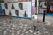 Motley group of pigeons scraping a life on the street in Berwick Street in Soho, London, United Kingdom. Like the grey characters on a nearby poster, life is a somewhat grim experience for these birds.