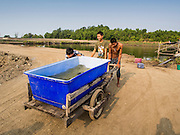 11 APRIL 2014 - PHANTHAI NORASING, SAMUT SAKHON, THAILAND: Workers on a fish farm collect water to take to holding tanks in Phanthai Norasing. Samut Sakhon is a coastal province southwest of Bangkok. It's known for its fishing and aquaculture industries but manufacturing companies are buying large plots of lands and building factories in the province, supplanting the traditional industries. A large number of Burmese migrants who work in the fishing and manufacturing sectors live in Samut Sakhon.      PHOTO BY JACK KURTZ