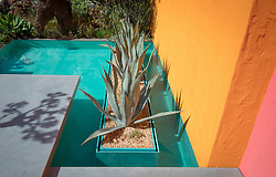 Beneath a Mexican Sky Garden, Agave americana planted in bed surrounded by turquoise pool with brightly painted walls.  Design: Manoj Malde, Built by: Living Landscapes, Sponsored by: Inland Homes PLC