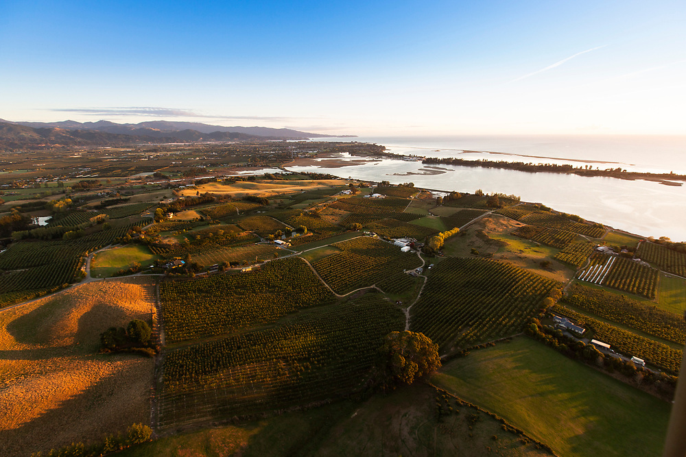 aerial view of apple orchards at sunrise in tasman bay