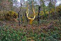 France, Ille-et-Vilaine (35), Paimpont, l'arbre d'or (artiste François Davin) dans le Val-sans-Retour en foret de Brocéliande // France, Ille-et-Vilaine (35), Paimpont, The Golden Tree (Artist François Davin) in the Brocéliande Forest, Val sans Retour