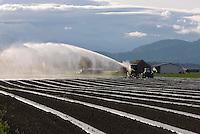 Irrigating crops in the Skagit Valley Washington USA