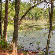 Pond in Harold Parker State Forest, Andover, MA