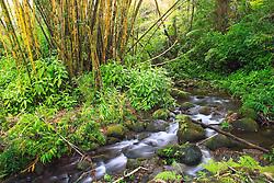 Kolekole Streams, Hilo, Big Island, Hawaii