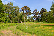 Summer landscape trees and grassy heathland, Suffolk Sandlings AONB, Sutton, Suffolk, England, UK