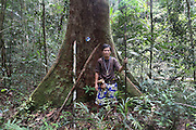 """A Penan chief standing next to a 'nailed' tree, marked with a tin can nailed to the tree, in Sarawak's Primary rainforest. They nail the tree with hundreds of 15 cm long nails making it impossible for the tree to be cut down with a chainsaw. Any attempt to cut the tree and it will break the chainsaw and hurt the logger. The Baram Penan indigenous people have successfully blockaded their forest from logging. They are settled since 60 years and resisted against the government logging companies longer than any other native peoples. They founded the """"Penan Peace Park"""", their name for the rainforest territory around their longhouse settlements, which is still virgin primary rainforest, uncut by loggers. Baram, Sarawak 2014 <br /><br />L'image monte un chef de Penan avec un arbre plein des clous.Lescentaines desclous dans les arbres arrêtent des bucherons d'abattredesarbres, au risque d'exploser leur tronçonneuse et se blesser. L'arbre est marqué avec uncanetteboissonécrasés attaché avec un clou à l'arbre.<br /> <br /> Borneo native peoples and their rainforest habitat revisited two decades later: 1989/1991 and 2012/2014/2015.  <br /> <br /> Sarawak's primary rainforests have been systematically logged over decades, threatening the sustainable lifestyle of its indigenous peoples who relied on nomadic hunter-gathering and rotational slash & burn cultivation of small areas of forest to survive. Now only a few areas of pristine rainforest remain; for the Dayaks and Penan this spells disaster, a rapidly disappearing way of life, forced re-settlement, many becoming wage-slaves. Large and medium size tree trunks have been sawn down and dragged out by bulldozers, leaving destruction in their midst, and for the most part a primary rainforest ecosystem beyond repair. Nowadays palm oil plantations and hydro-electric dam projects cover hundreds of thousands of hectares of what was the world's oldest rainforest ecosystem which had some of the highest rates of flora and fauna endemism"""