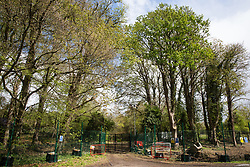 Wendover, UK. 4th May, 2021. A view of trees alongside the A413. Large areas of land are currently being cleared of trees and vegetation around Wendover in the Chilterns AONB in preparation for the HS2 high-speed rail link, with some work recently taking place after dark. Activists opposed to HS2 occupy Wendover Active Resistance Camp on the opposite side of the A413.
