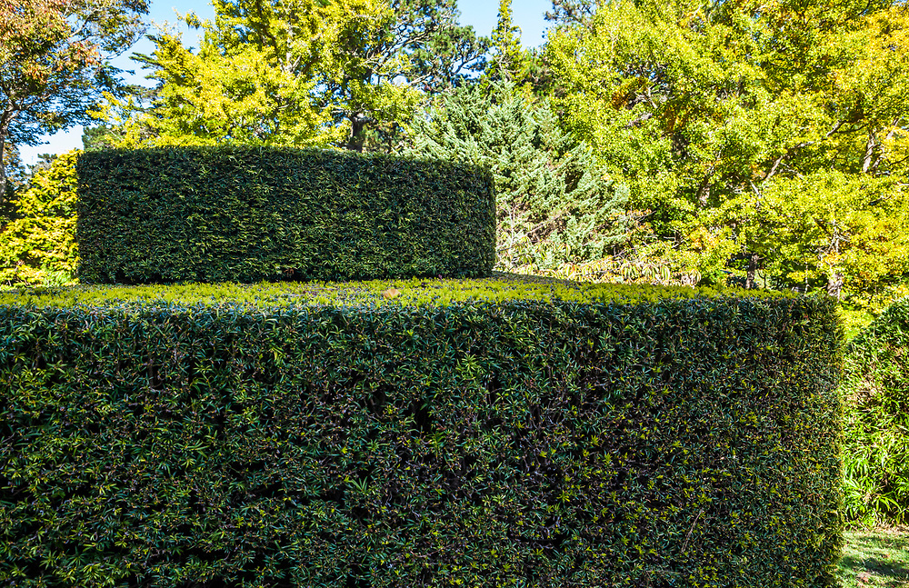 A manicured hedge or topiary in the Japanese Gardens in Golden Gate Park, San Fransisco, California, USA.