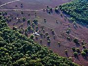Nederland, Noord-Holland, Hilversum, 26-08-2019; Hilversumse heide, bloeiende hei op de Zuiderheide.<br /> Hilversum heath, flowering heath.<br /> <br /> luchtfoto (toeslag op standard tarieven);<br /> aerial photo (additional fee required);<br /> copyright foto/photo Siebe Swart