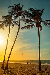 Coqueiros na Praia de Cumbuco está localizada no município de Caucaia, a 30 km da capital, Fortaleza no estado do Ceará. FOTO: Jefferson Bernardes/ Agência Preview