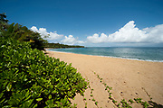Tropical rainforest at the edge of the sea, Masoala National Park, Madagascar, largest of the island's protected areas, UNESCO World Heritage Site, Masoala peninsula is exceptionally diverse due to its huge size, and variety of habitats
