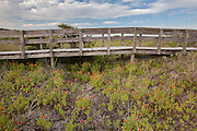 Boardwalk and Indian Blanket Flowers, South Carolina